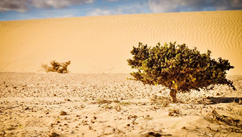 Desert Water Supply